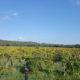Offerta Primavera 2 Notti B&B in Maremma Toscana| Marzo Terme di Petriolo